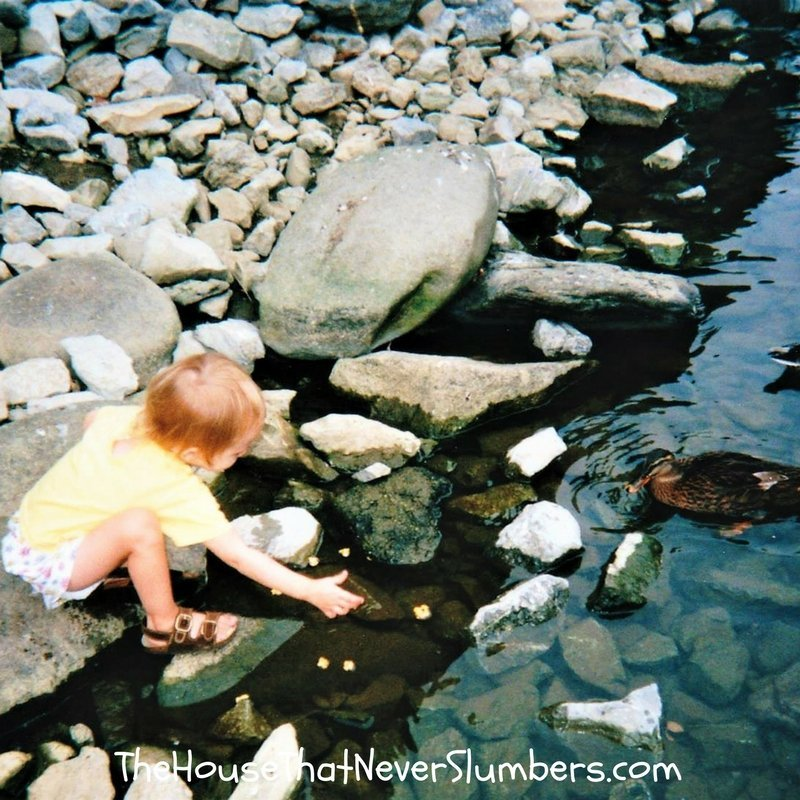 Feeding the Ducks Pigeon Forge Tennessee