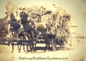 Early 1900's Threshing Ring - Randolph County, Indiana - Horse Team