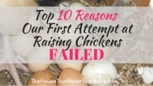 Top 10 Reasons Our First Attempt at Raising Chickens Failed #chickens #homesteading #eggs