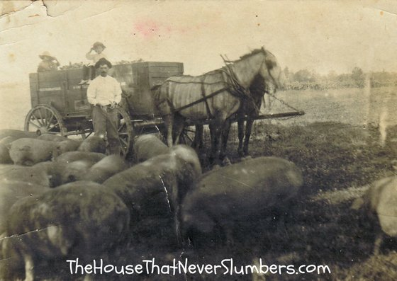 Ozro Bales Sells Hogs - Free Online Newspaper Search - #genealogy #familytree #familyhistory #ancestry #ancestors #indianahistory
