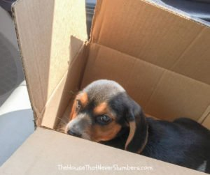 I Heroically Saved a Puppy from Certain Death - #humor #puppy #puppies #babyanimals
