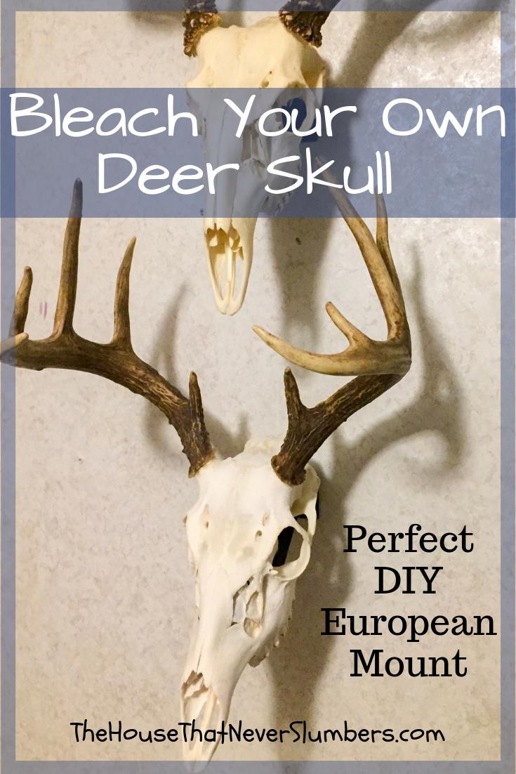 Bleach Your Own Deer Skull For A Perfect Diy European Mount